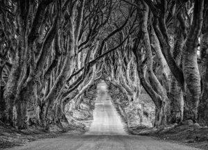 Storytelling Ireland